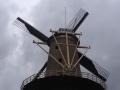 De Nieuwe Palmboom - Bastiaan de Jong